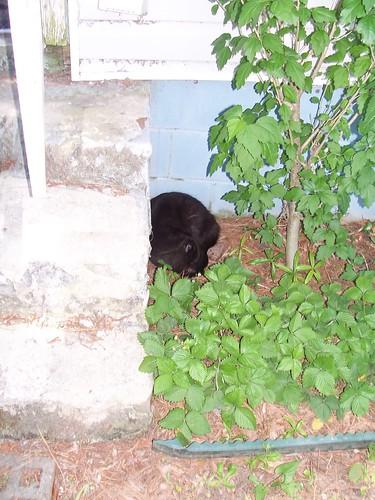 doozer asleep in the yard