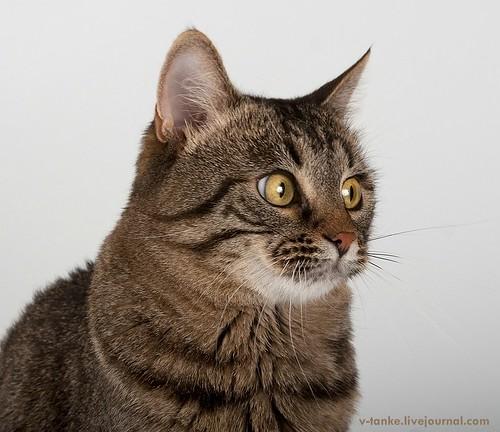 Всем поклонникам кота Пиндыка посвящается :) Pindo & Co (4)