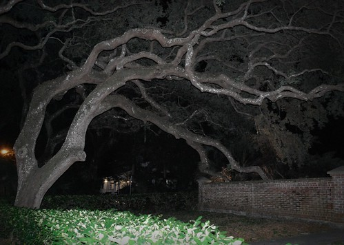 Night branches