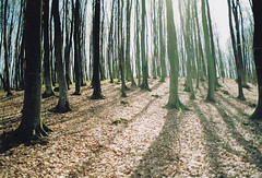 rgenwaldr. (schommsen) Tags: trees light shadow sun film 35mm canon licht iso200 ae1 laub insel canonae1 rgen sonne wald bume schatten 2010 shittyscan paradiesfilm schommsen echtgeileslicht