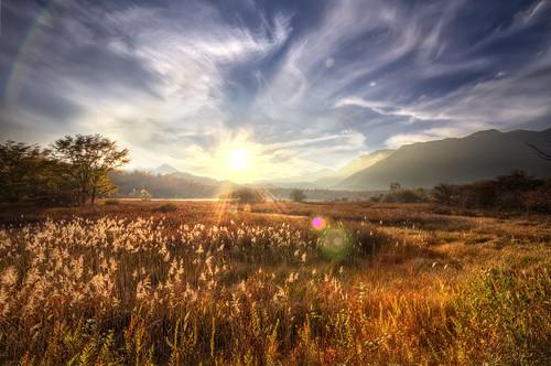 フリー写真素材, 自然・風景, 草原, 夕日・夕焼け・日没, 日光・太陽光線, 日本,