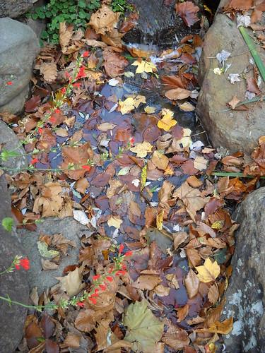 Longwood October 2010 127
