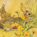 Doe Rabbit & Babies Postcard