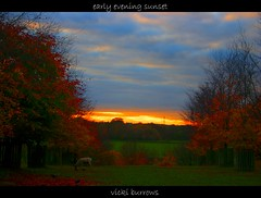 EARLY EVENING SUNSET..... (vicki127.) Tags: autumn trees sunset red sky green field grass canon300d branches pylon deer 127 vicki picnik dunhammassey afternoonwalk ions digitalcameraclub youmademyday mywinners flickraward ilovemypics november2010 100commentgroup hairygitselite adobephotoshopcs5 ringofexcellence vickiburrows