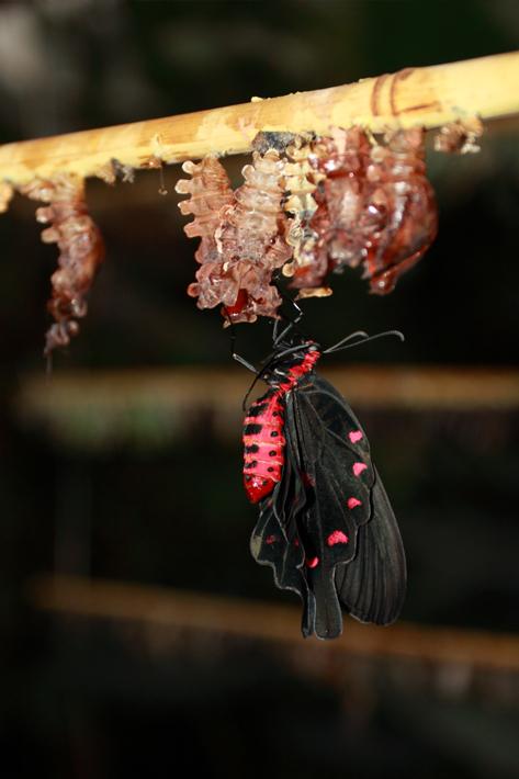 110710_butterfly08