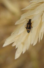 IMG_3814 (Buglady1104) Tags: california plants insects wilderness cotati rohnertpark cranecreekregionalpark