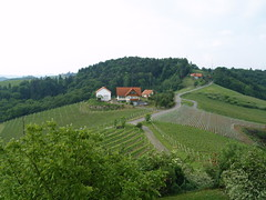Vineyards near Gamlitz, Austria, by HalehR