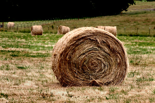 Hey, it's Hay copy