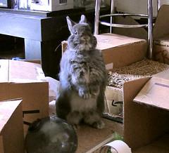 Periscoping Bunny
