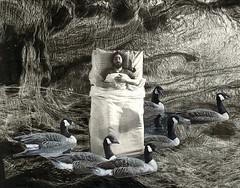 Night Flight on the Blue Goose (nkimadams) Tags: blackandwhite collage death geese sleep surreal