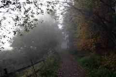 Misty Morning - by johnivara