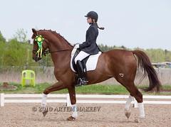 IMG_4444 (White Bear) Tags: horses horse animals russia contest russian equestrian equine artem dressage лошадь фестиваль артем конь кони новый i лошади спорт makeev приз кск век соревнования этап макеев конный выездка