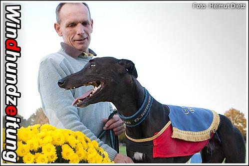 Greyhound Winner Grote Prijs van Beringen*: Graf Moltke