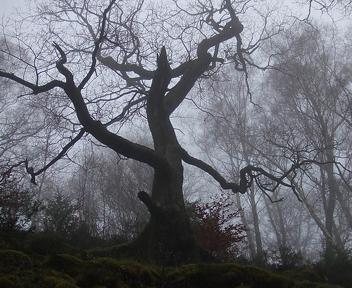 Creepy Tree in Fog