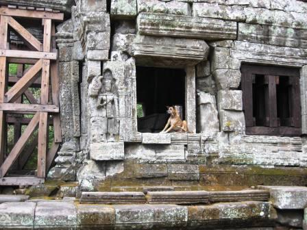 Dog in the ruins