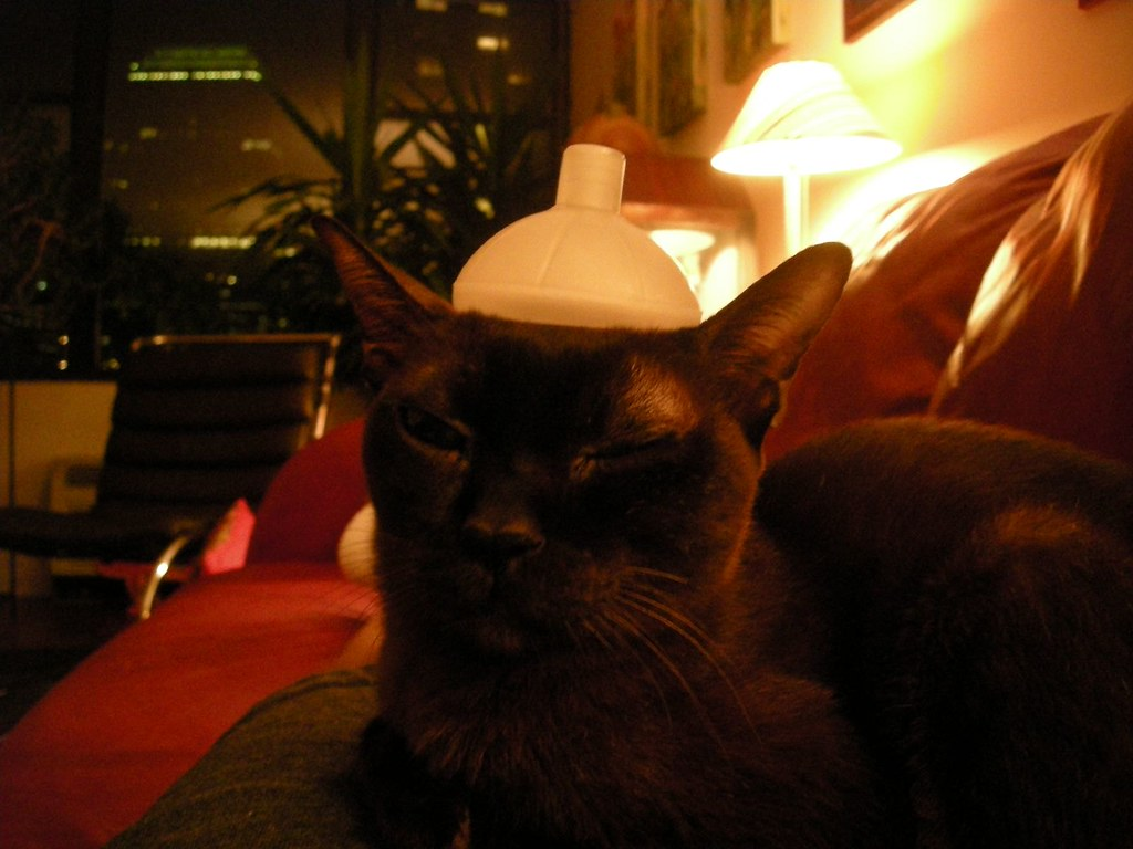 the world s best photos of cat and inhaler flickr hive mind