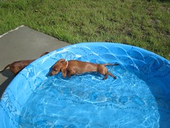 Trying to lay down in the pool