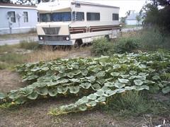 columbus plants montana mt dish satellite motorhome winebago 59019