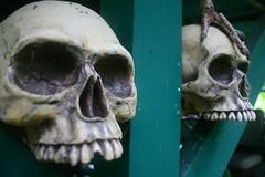 Skulls 2 (bozy10) Tags: skulls hawaii valley waipio