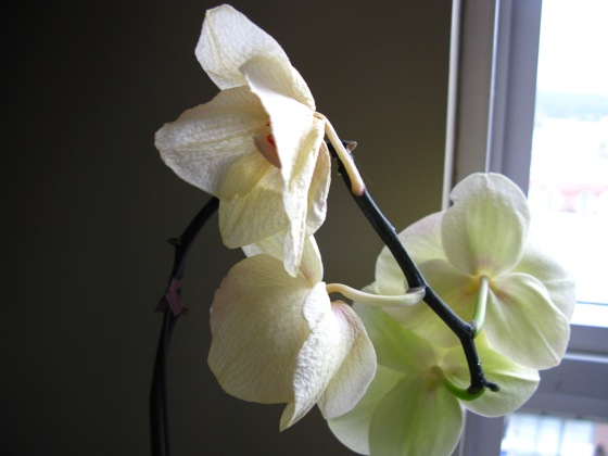 orchid update 001