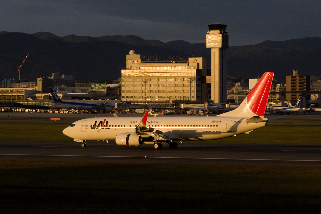 JAL's B737-800 in the sunset shine
