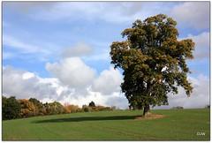 Oak and Shadow (Donna JW) Tags: trees shadow field clouds oak october autumncolours crop gamewinner friendlychallenges gamex2winner pregamewinner