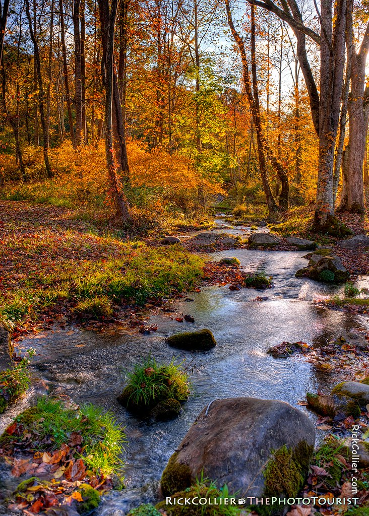 Autumn Stream HDR