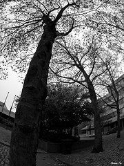 Branching Out (Herman Tse) Tags: autumn trees shadow urban tree art fall leaves silhouette vancouver interesting bend branches perspective olympus randomness fisheye fallen photowalk fractal e3 curve 8mm zuiko starry newwestminster vessels
