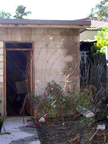 Spider Web_01