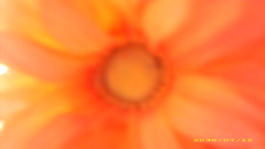 flower2 (fashiongirl20033) Tags: orange flower yellow petal