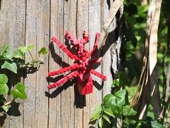 Spinne (wo.men) Tags: rot klein lego spinne baum freizeit legoland beine sechs efeu gnzburg fhler 16aabb16