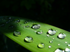 Natural magnifiers (sam2cents) Tags: raindrops blueribbonwinner naturewildlifepanasoniclumixdmclz3water