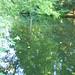Großer Tiergarten_2