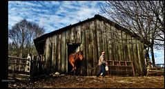 Compadre!! Uyuuuii! (Rodrigo Basaure) Tags: horse field caballo campo compadre establo