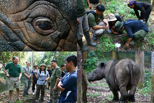 Honda Rhino Rescue Project