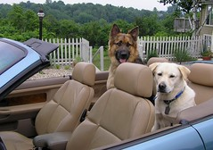 Back Seat Drivers
