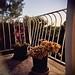 succulents on patio