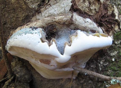 Big ol' fungus