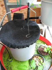 Worm bucket (Amy M. Youngs) Tags: art vegetables bucket experiment indoor ladder worms composting hydroponic vermiponics
