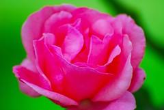 16-06-07-0091 (fkarimpour) Tags: flowers flower nature germany nikon stuttgart urbannature d200 nikkor vr 70300 nikond200 70300vr nikkor70300mmf4556gedifafsvr