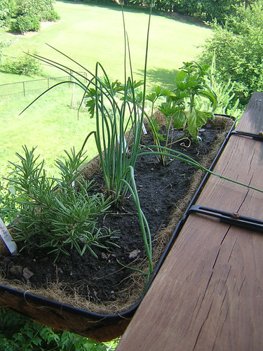 herbs 061907