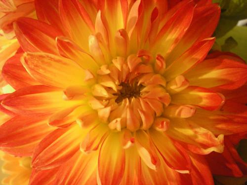-софия ротару осенние цветы песня:
