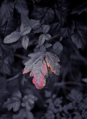 LN_0706_Flickr018 (17% Grey) Tags: california trees nature landscape bracket bayarea briones