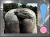 070617 ac 070716 © Théthi ( update ) (thethi (pls, read my 1st comment, tks a lot)) Tags: fesse animal drole queue lol cheval équidé carré setjuin framed changement fun humournoir 1596 faves30 setanimaux 29faves
