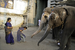 Reverence (Elishams) Tags: india elephant girl animal temple indian traditional culture danse bow devotion reverence karnataka hindu hinduism tamilnadu pilgrim kanchi southindia pilgrims kanchipuram benediction southindian  kancheepuram ashirvaad southindianculture 50millionmissing