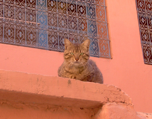 Cat, Marrakesh
