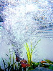 underwater (aycasan) Tags: flower nature turkey aquarium underwater trkiye iek turkei doa akvaryum sualt