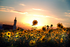 + One Is Different + (florian.b) Tags: sunset sky plants church field clouds evening sonnenuntergang pflanzen feld himmel wolken sunflowers wallfahrt sonnenblumen mariabrnnlein