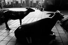 49-板橋公園-2006