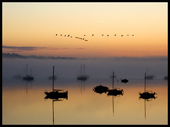 First autumn sunrise (ExeDave) Tags: exeestuary exe starcross devon england uk estuary river morning autumn canadagoose brantacanadensis skein bird wildbird wildfowl mist bravo aplusphoto superaplus abigfave impressedbeauty greatercanadagoose geese inflight september 2007 teignbridge explore interestingness500 goldstarawardgoldmedalwinner canadageese dawn iba